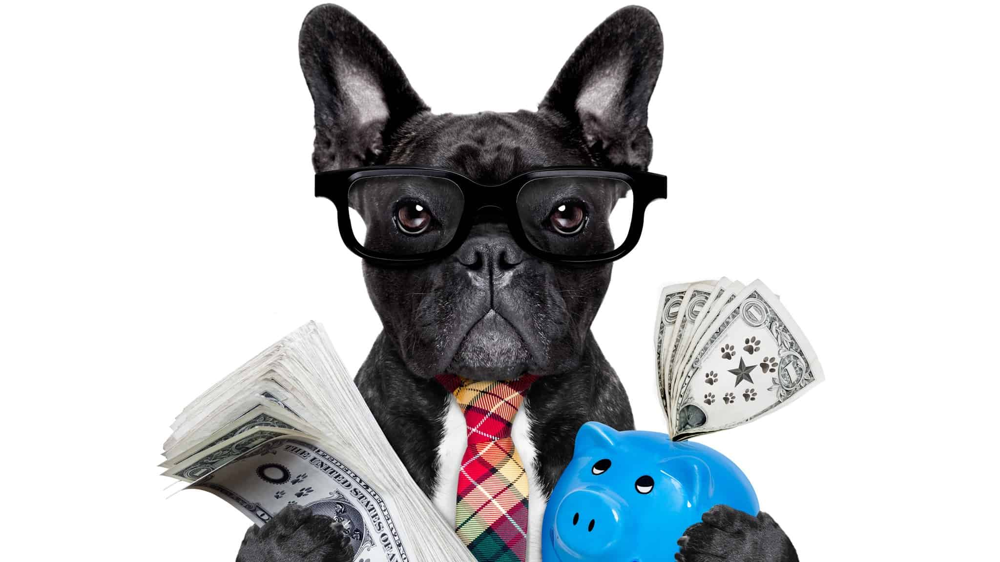getting growth and income from asx shares represented by dog holding cash in one hand and a piggy bank in the other
