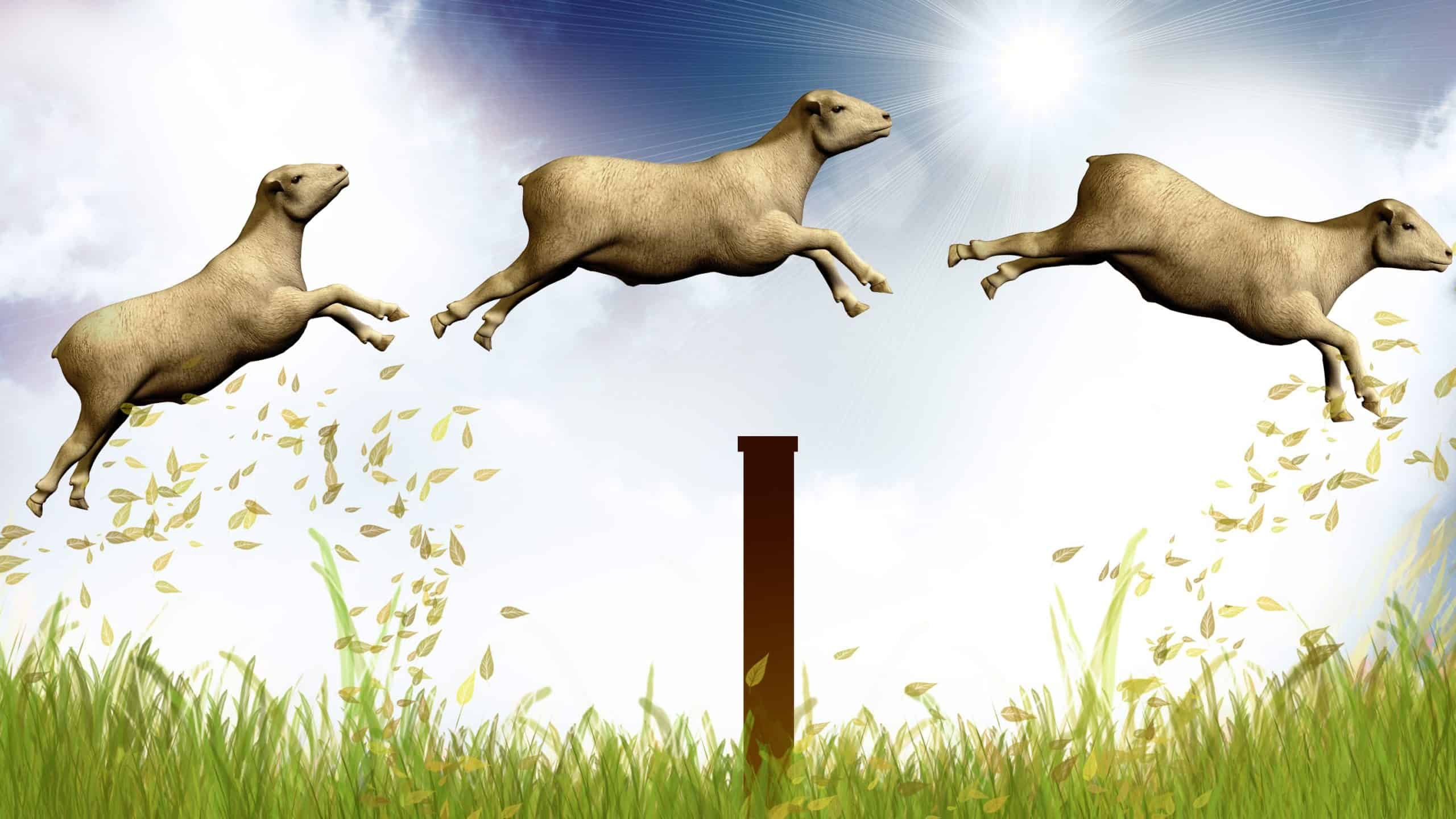 sheep leaping over a pole representing leaping elders share price