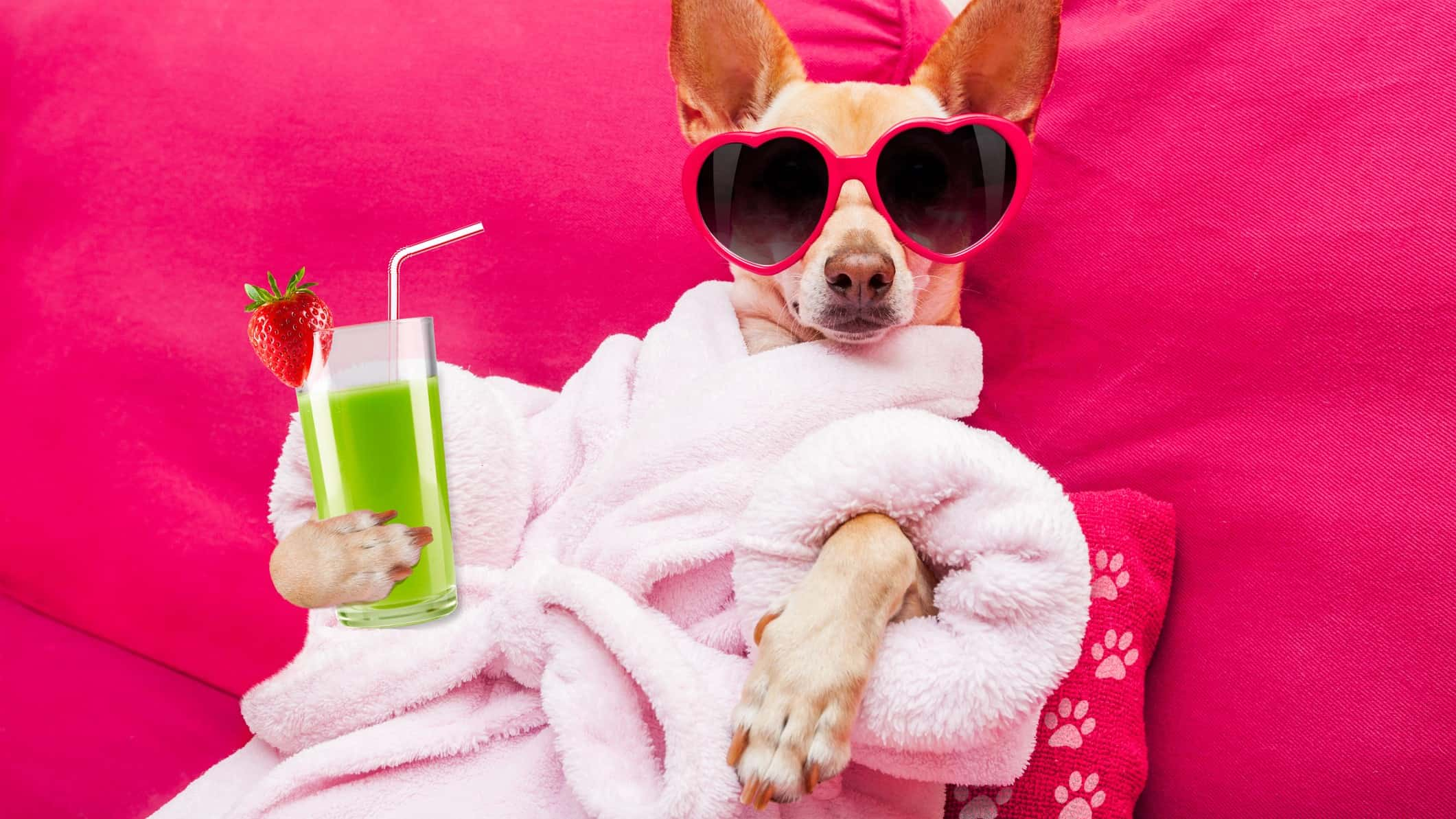 Small dog in bathrobe and wearing sunglasses and holding a green cocktail drink indicating a life of luxury with passive income shares