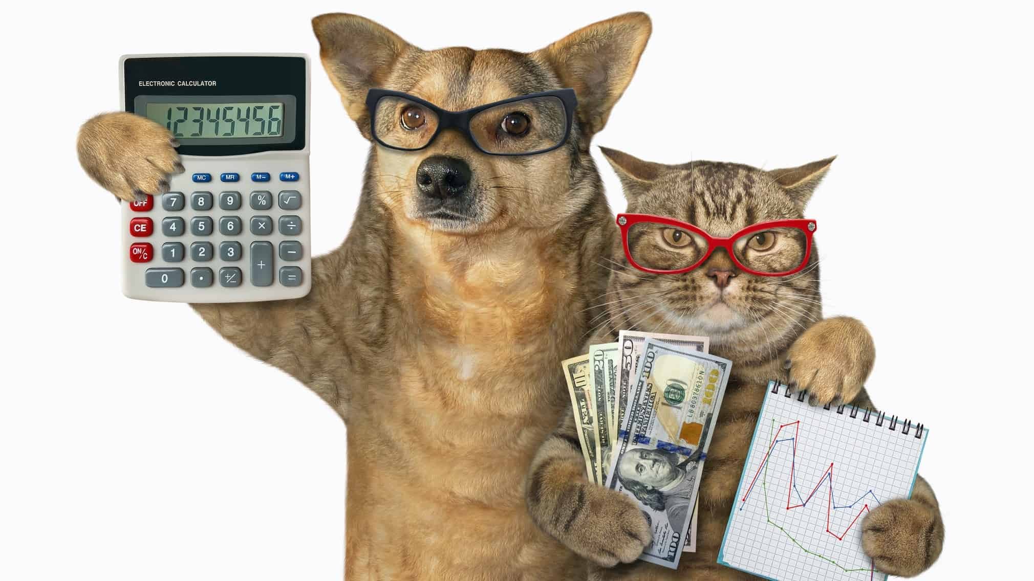 investors in asx shares represented by cat and dog wearing glasses and holing charts and cash