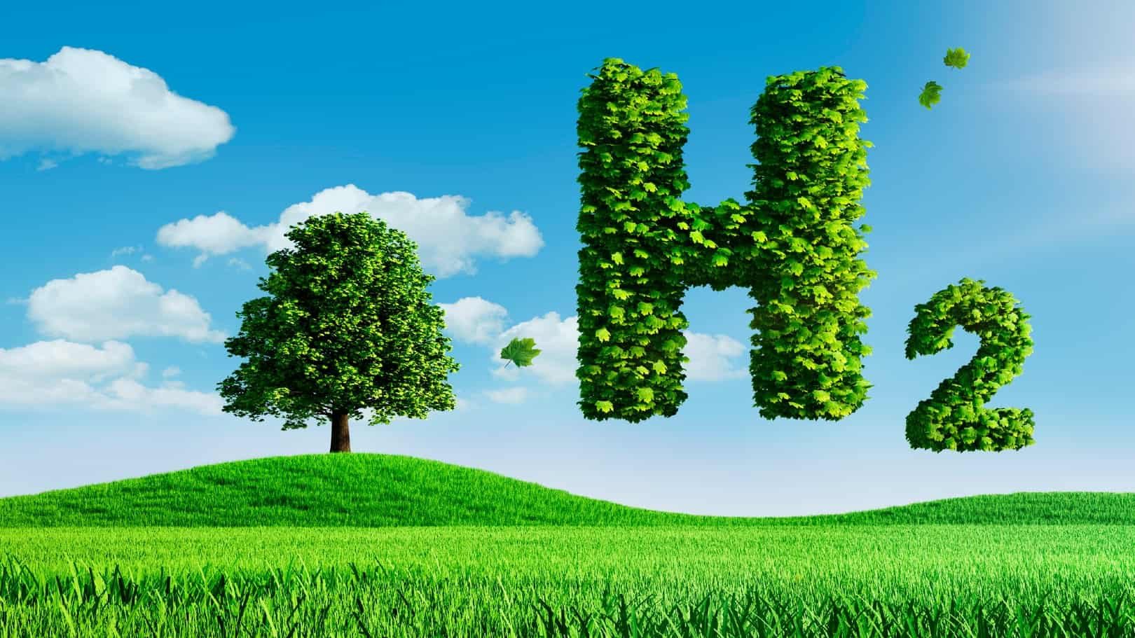 A graphic of a tree and a green leafy capital letter H on a blue sky background, indicating a share price rise for ASX companies dealing in hydrogen energy
